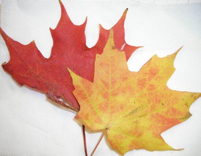 1s leaves 09