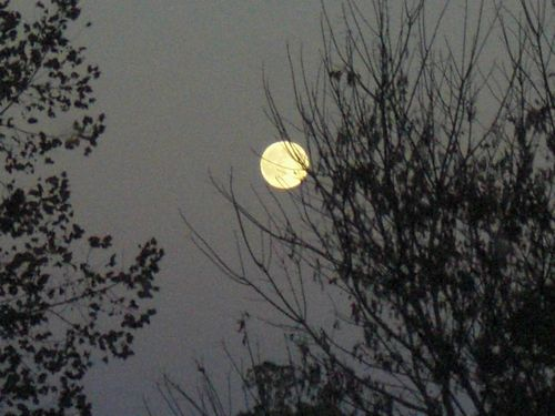 Full moon in trees 2
