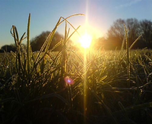 Winter-solstice-grass-dew-ground1