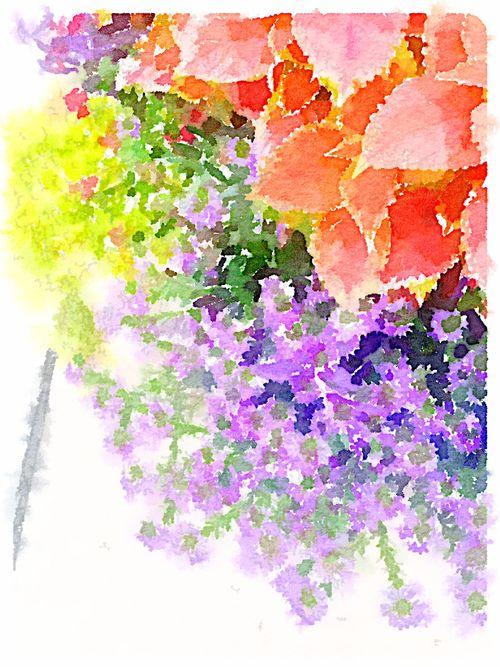 Flower 1 wcolor