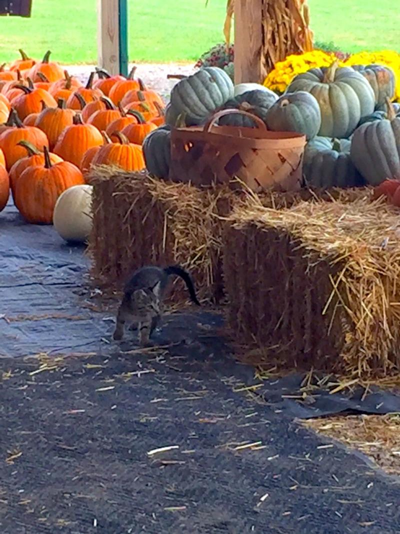 Kitten in fall