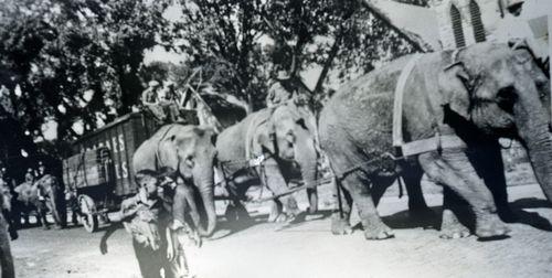 BarnesElephants-Pulling-Seat-blank-Wagon-Posted-6-12-21