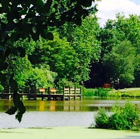 Jackson pond dock