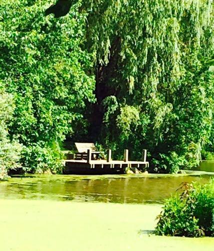 Jackson pond bench