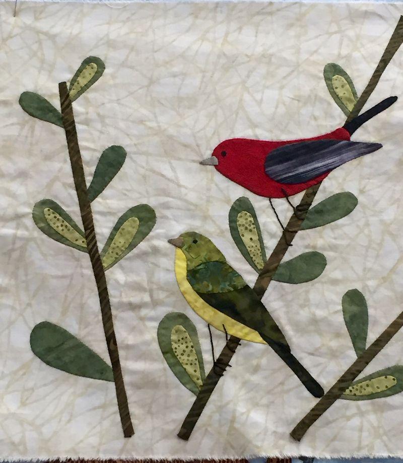 Scarlet tanager bl