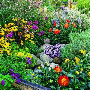 Summer-flower-garden-management