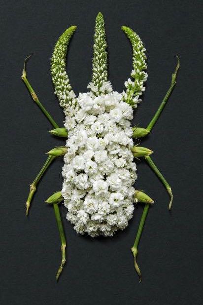 Floral bug