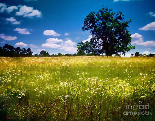 Summer-meadow-patricia-l-davidson-