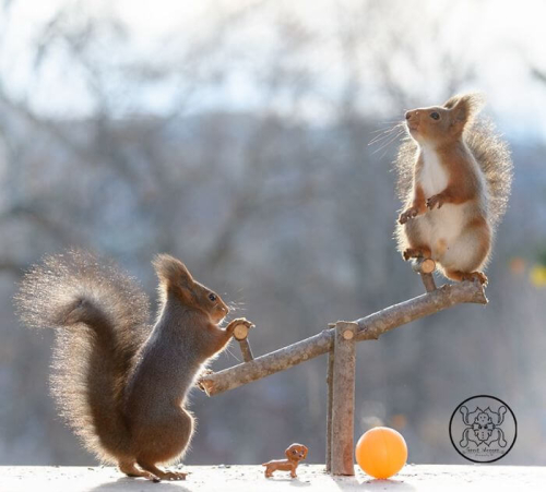 Photographer Captured Squirrels Every Day For Six Years And Here Are The Incredible Results 14