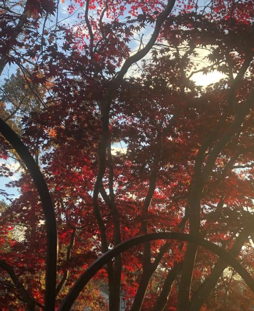 Sky of trees