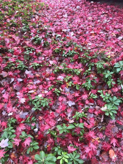 Red lawn