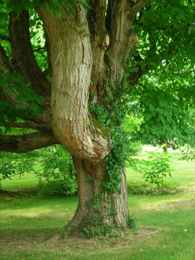 My_tree_2