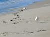 Birds_beach1jpg